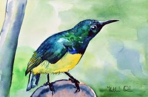 Yellow Bellied Sunbird Featured in Karavella Atelier