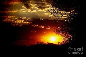Featured African Sunset  photograph by Dora Hathazi Mendes