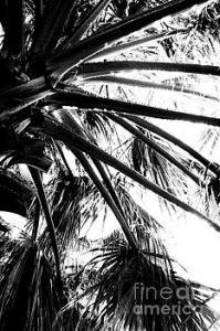 Featured Branches of the Palm Tree 01 by Dora Hathazi Mendes