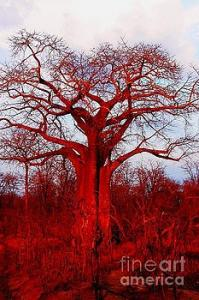 Featured Baobab Tree 05 photograph by Dora Hathazi Mendes