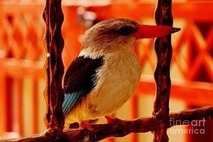 Featured Grey Headed Kingfisher 02 photograph by Dora Hathazi Mendes