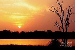 Featured African Sunset at Shire River in Malawi 01 photograph by Dora Hathazi Mendes